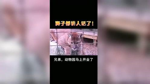 搞笑配音狮子都会讲人话了搞笑视频上热门爆笑