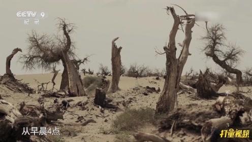 沙漠中整整一个月的试验仅仅是导弹研制的开始|军工记忆