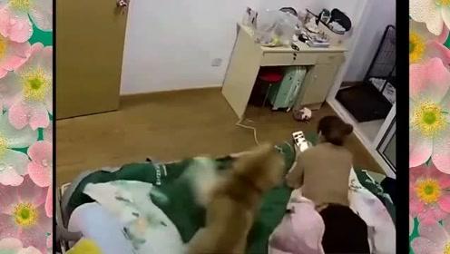 这狗子几天没挨打是疯了吗?