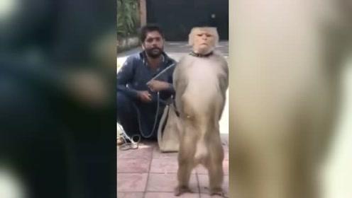 就这样吧,人和猴子只能带走一个#猴子敬礼#卡点