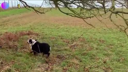 国外搞笑视频合辑:这些整人专家连小宠物都不放过,太搞笑了