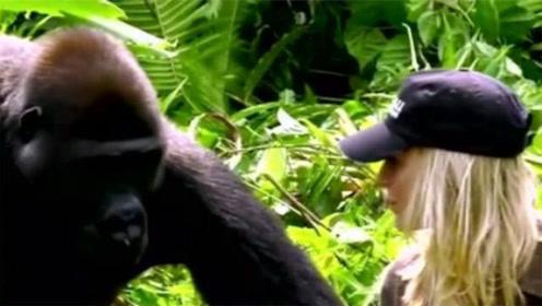 女子不顾家人反对,与大猩猩结婚,婚后女子的行为让人难以理解