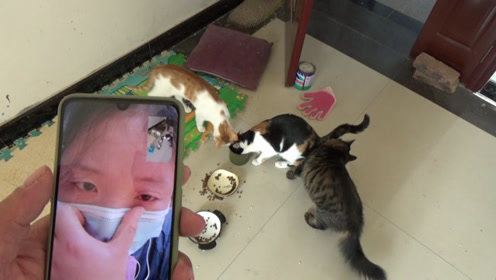 打工生活不容易,袄张和家里的猫咪开视频,没绷住掉下眼泪