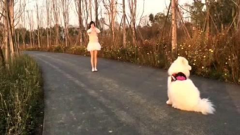 妹子穿裙子和狗狗玩游戏,没想到被嫌弃,太搞