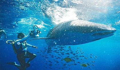 大胆潜水员和鲨相伴游泳