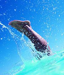 轻装跳入40米深的游泳池