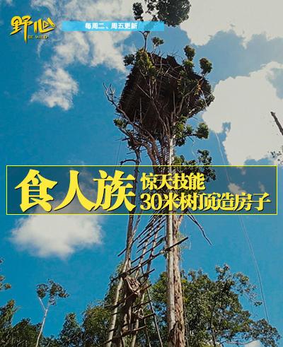食人族搭出30米高树屋