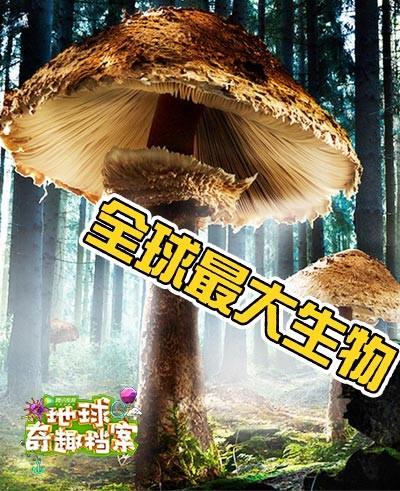 千年老蘑菇藏身地底5.6公里 世界最大生物竟是森林杀手