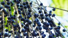 亚马逊巴西莓了解一下