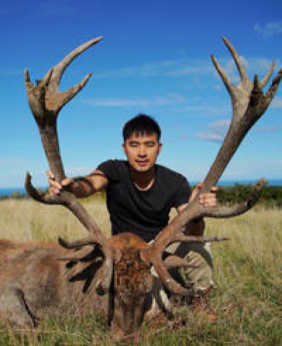 新西兰私人猎场角逐巨型红鹿