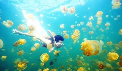 和2万只水母一起游泳