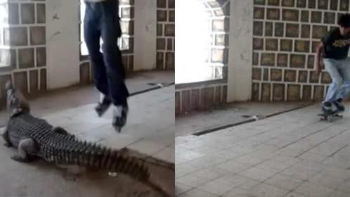 作死男子鳄鱼头上玩滑板