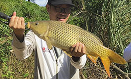 太平湖玉米重窝守大鱼