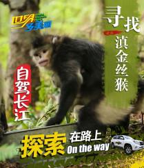 寻找莽莽森林中的滇金丝猴