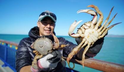 新西兰现捕肥美沙蟹做三吃 隔壁小孩都馋哭了