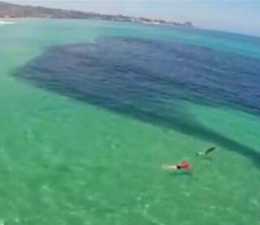 墨西哥海滨突现巨大黑影