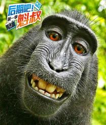 寻找全世界最会自拍的猴子