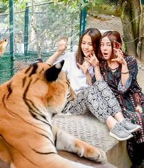 泰国清迈上演美女与野兽