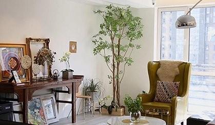 【住艺】他在客厅种了一棵树