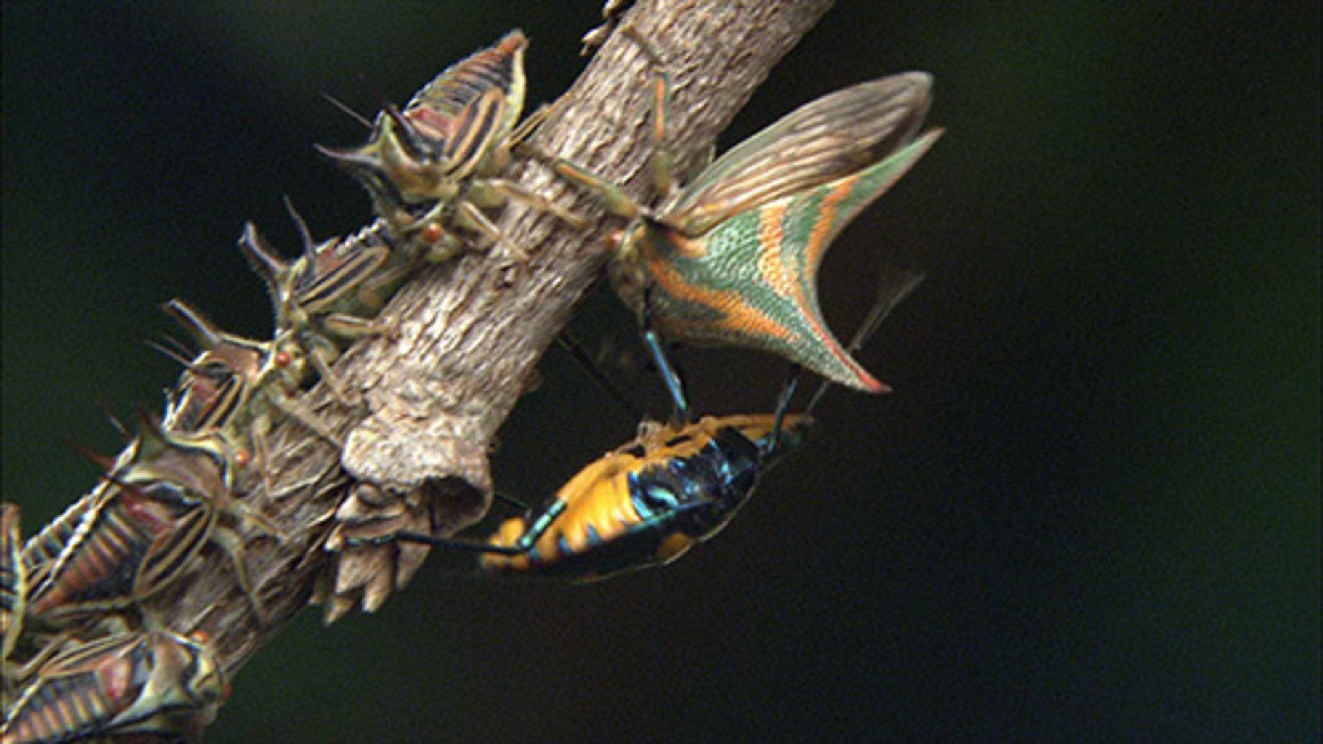 森林的昆虫和动物