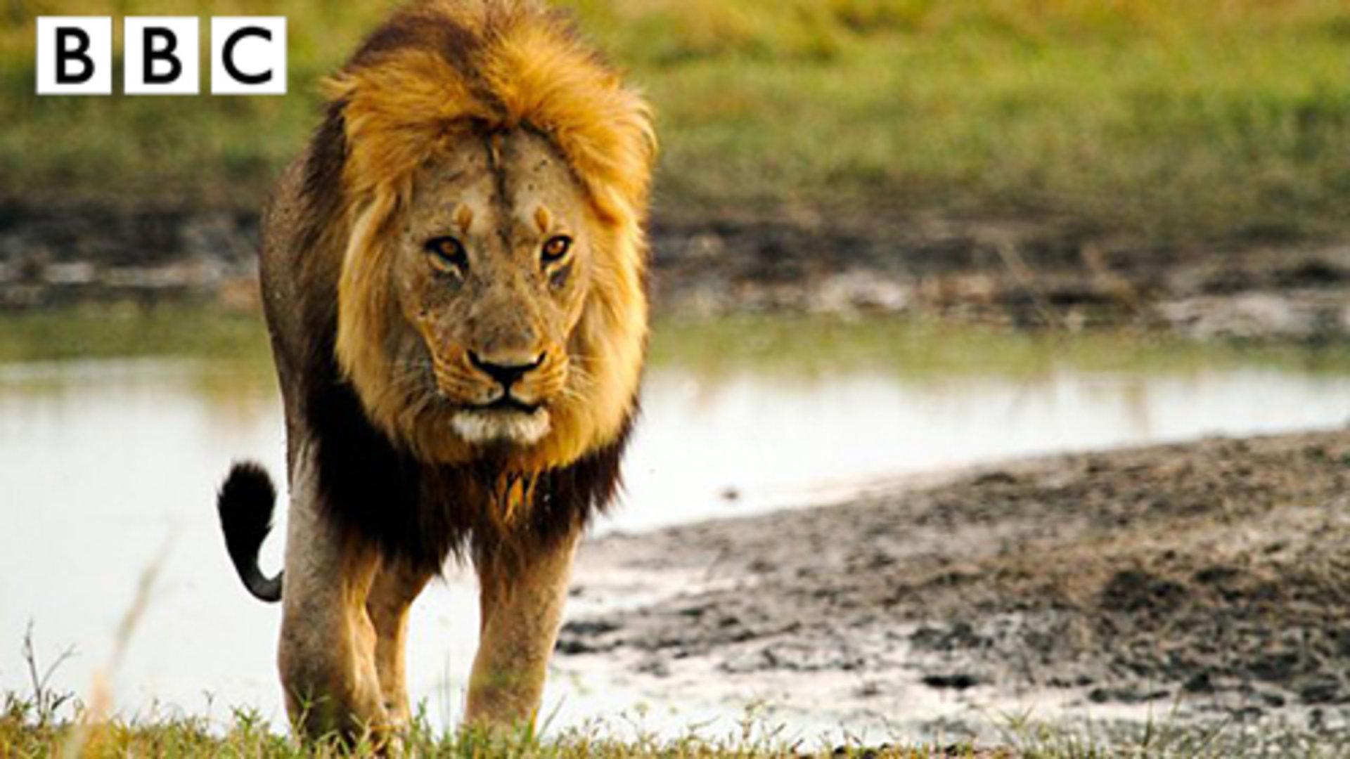 可观看付费视频          闪电引发非洲草原大火 动物天堂一片焦黑 7.