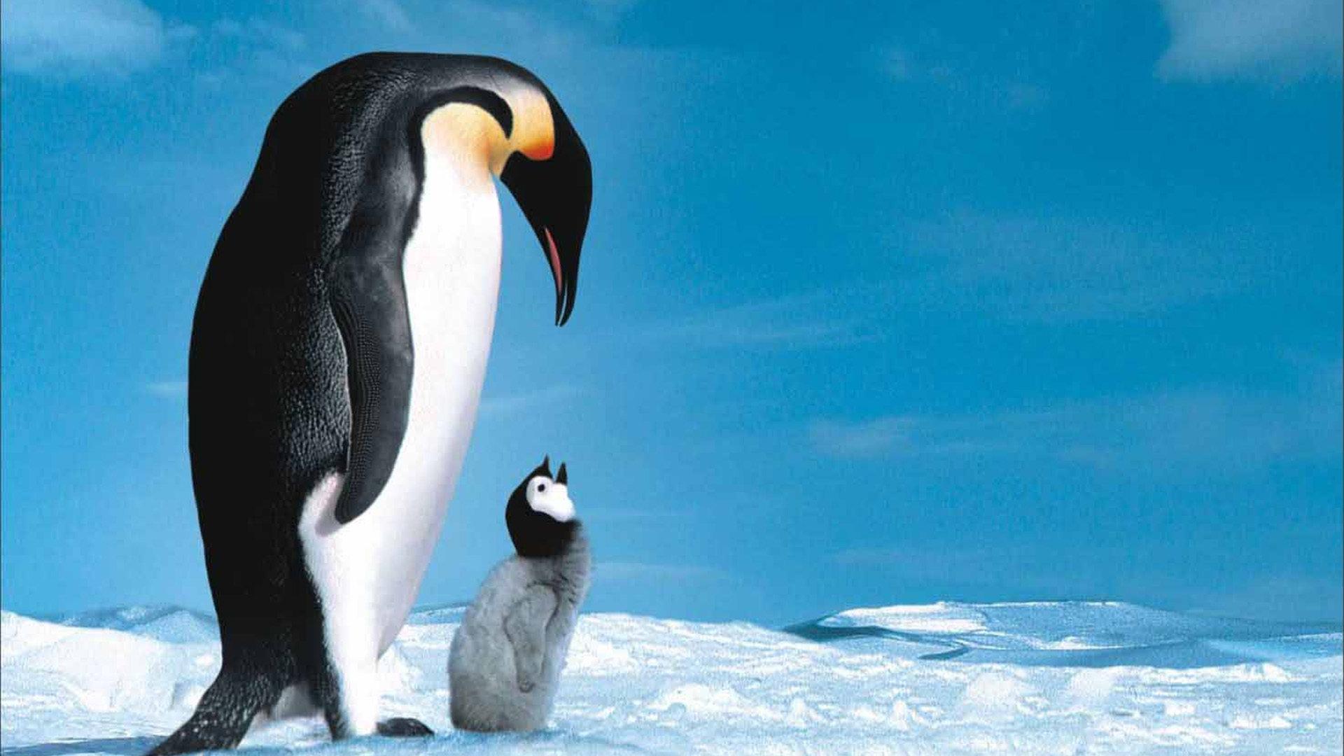 为了让企鹅宝宝健康成长,企鹅爸爸妈妈每年都会从北部来到南部孵化小