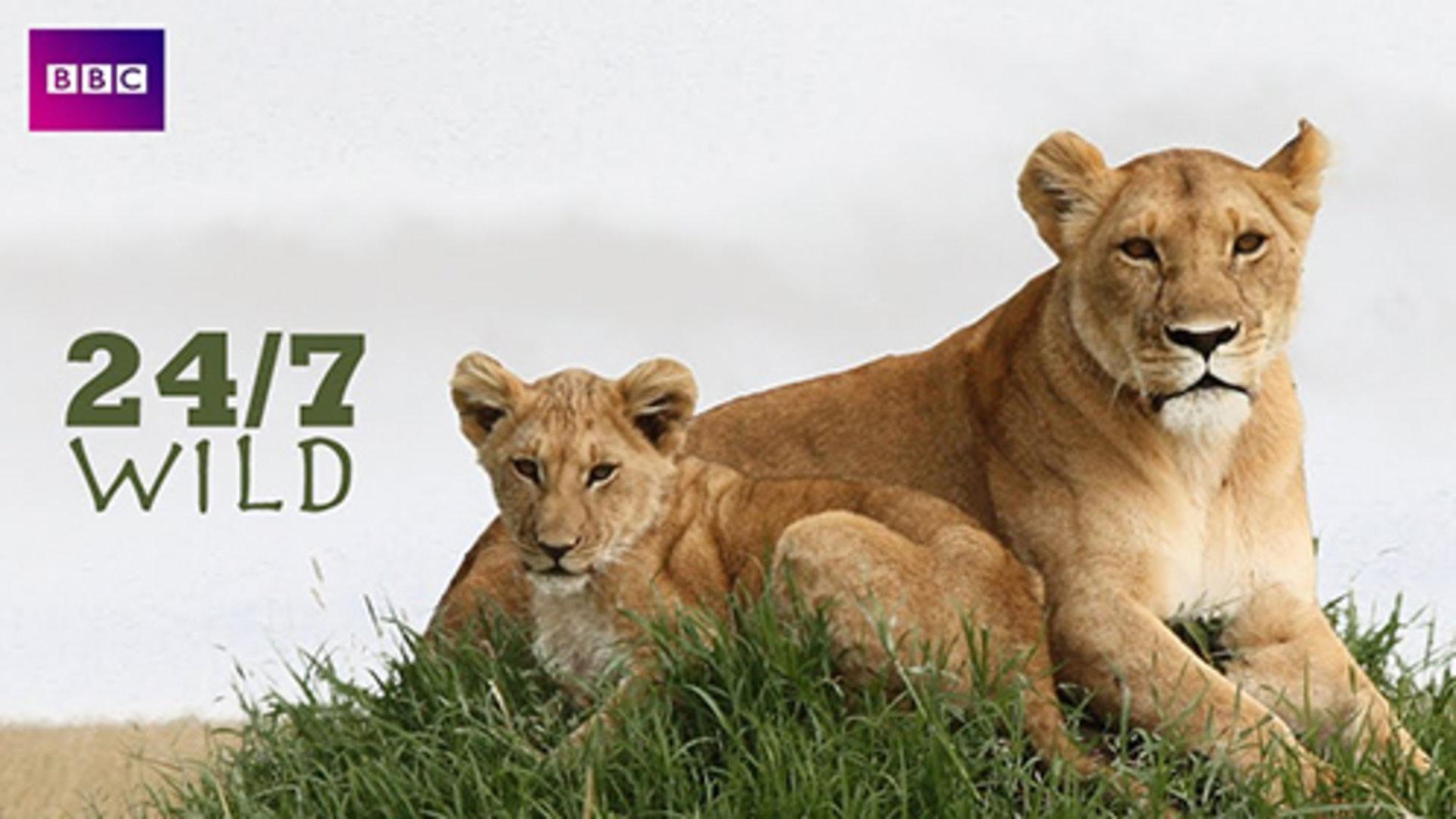 全天候野生动物追踪