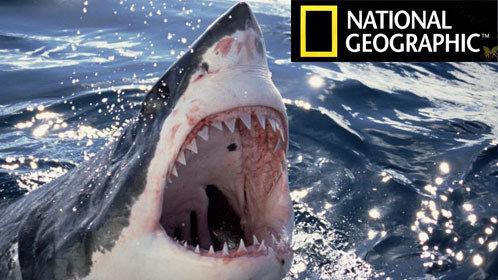 自然 野生动物摄影师安迪卡萨格兰德希望近距离拍摄顶级掠食动物