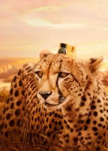 假如动物会摄影