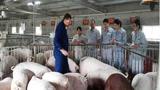 美国为什么能成为养猪第一大国,看看人家的养猪模式就知道了!