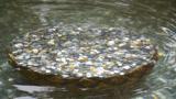 这些年游客们往许愿池投的硬币,最后都到哪儿了?答案你肯定不知道