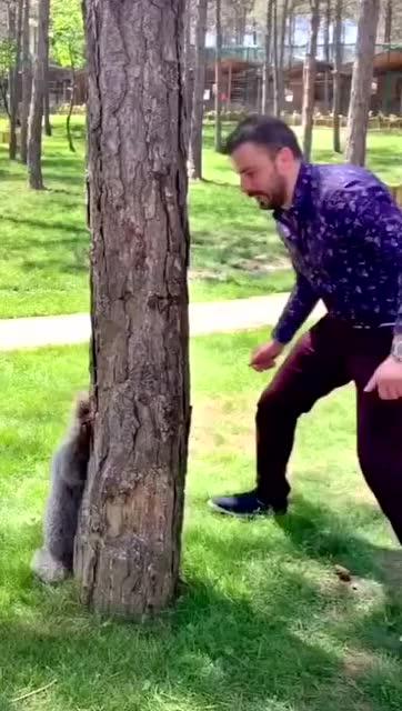 看看俄羅斯人養的寵物 居然還會玩躲貓貓 想rua了