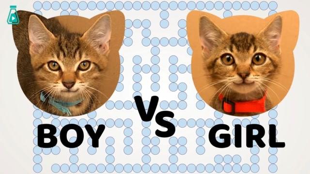 兩隻小貓咪挑戰迷宮,在裏面穿梭的亞子,完全證明貓果然是液體的
