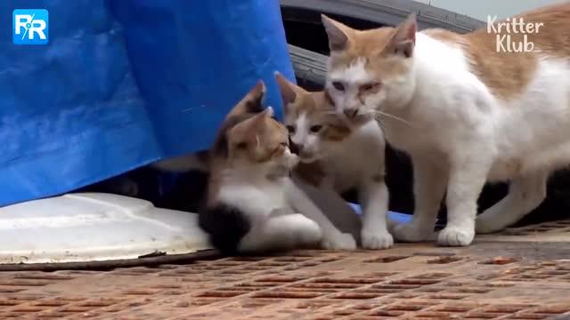爲什麼貓咪被人所傷後依然選擇相信人類?