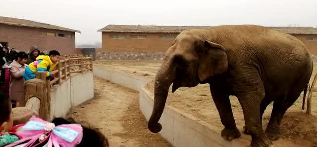 正月初一到十五,衡水武邑野生动物园嗨翻天!