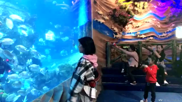 水族馆的工作人员太配合了,完美!_神马乐团