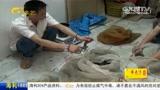 广西一男子贩卖千余只大壁虎 被判十年刑期