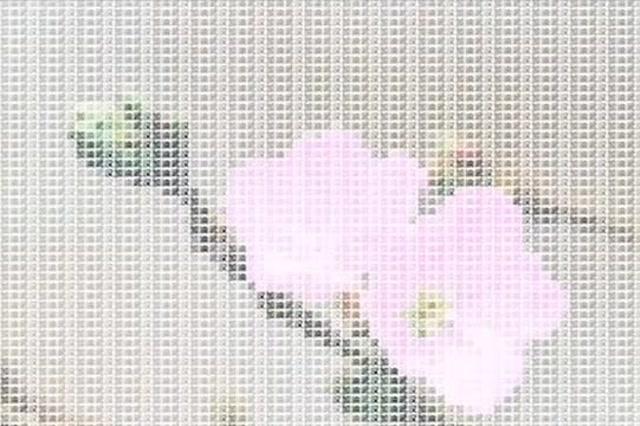 武大學生代碼敲出櫻花開放,也太厲害了吧!