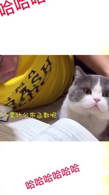 清華博士閒在家無聊給貓講函數!