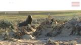 实拍海豹猎杀企鹅 贼鸥群前来救企鹅