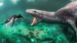海豹玩弄自己的猎物:让你再跑一会,翻不出我的手掌心
