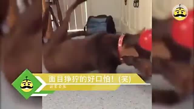 主人在猫脖子上装摄像头 竟发现惊天大秘密 搞笑萌宠视频_秋霞电影网app