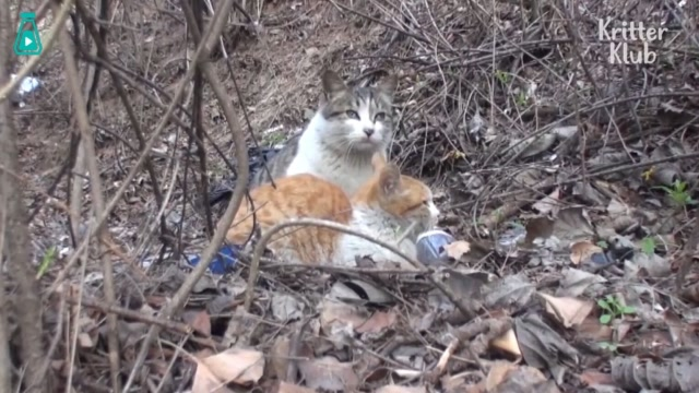 狸花貓給殘疾橘貓當守護神,兩隻相依爲命的流浪貓,終於熬過了苦日子