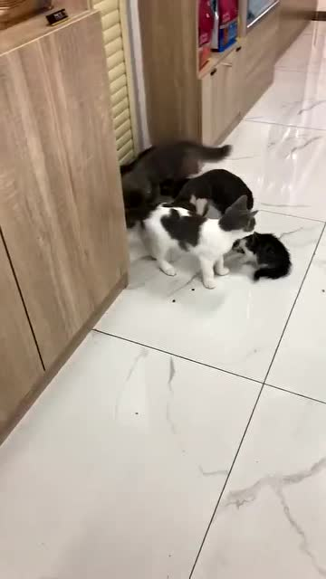 這一刻橘貓用實力說明,分餐制的必要性
