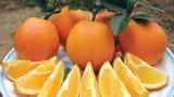 看肚脐挑橙子有道理吗?