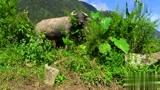 中国人到越南,实拍越南的贫困山区农村,跟中国哪里有点像?