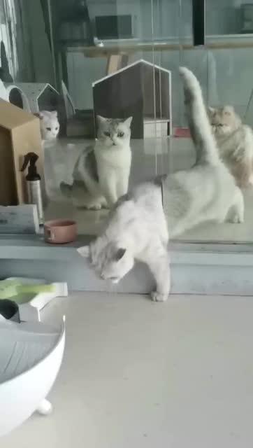 旁邊的貓都看懵了