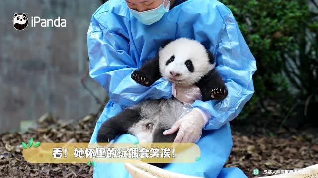 熊貓那麼多,我什麼時候才能擁有