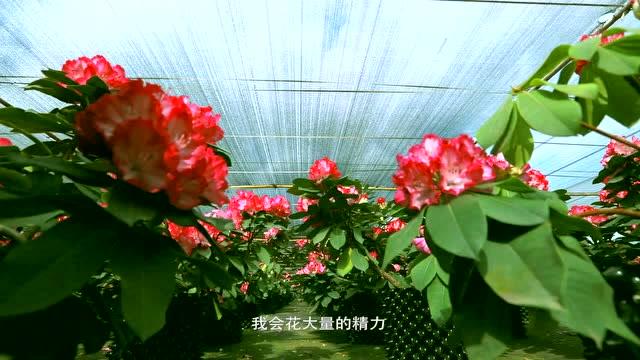 《花開彩雲南》宣傳預告片