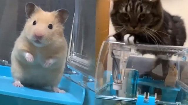 倍儿搞笑:猫咪守笼待鼠